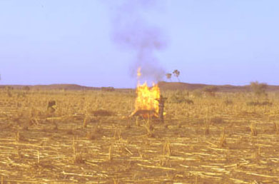 Fire: photo of burning of millet stalks